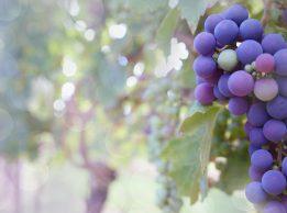 grapes 2180685 1920